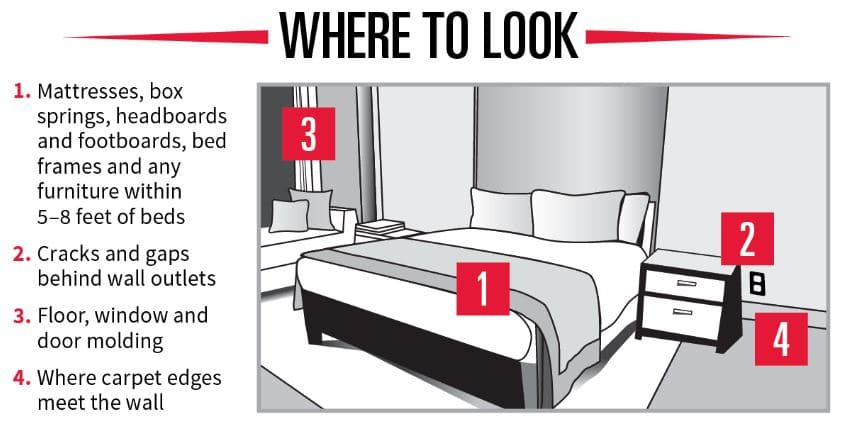 where to check for bed bugs