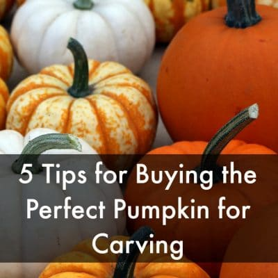 5 Tips for Buying the Perfect Pumpkin for Carving