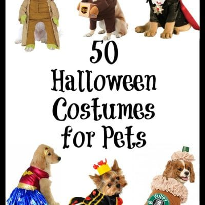 50 of the Most Creative and Adorable Halloween Costumes for Pets