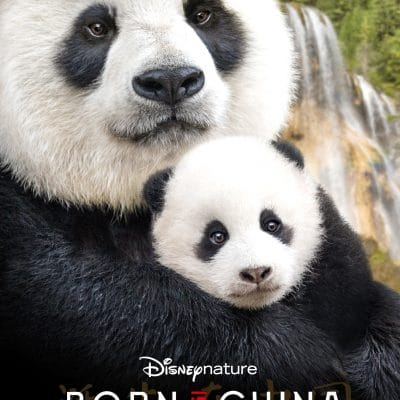 Meet the Characters in Disneynature's Born In China – In Theaters April 21st!