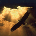 My message to my daughters…Live life like an eagle