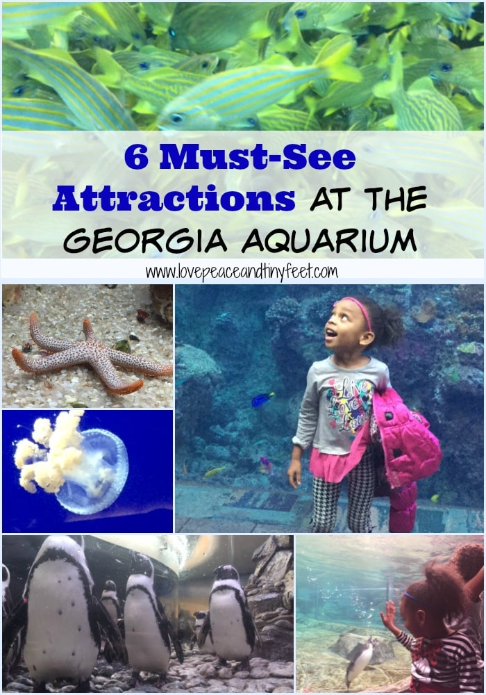 must see attractions at the georgia aquarium