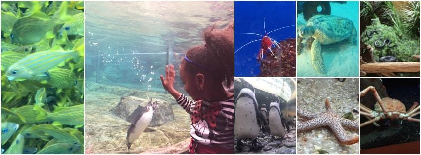 spring break ideas - georgia aquarium