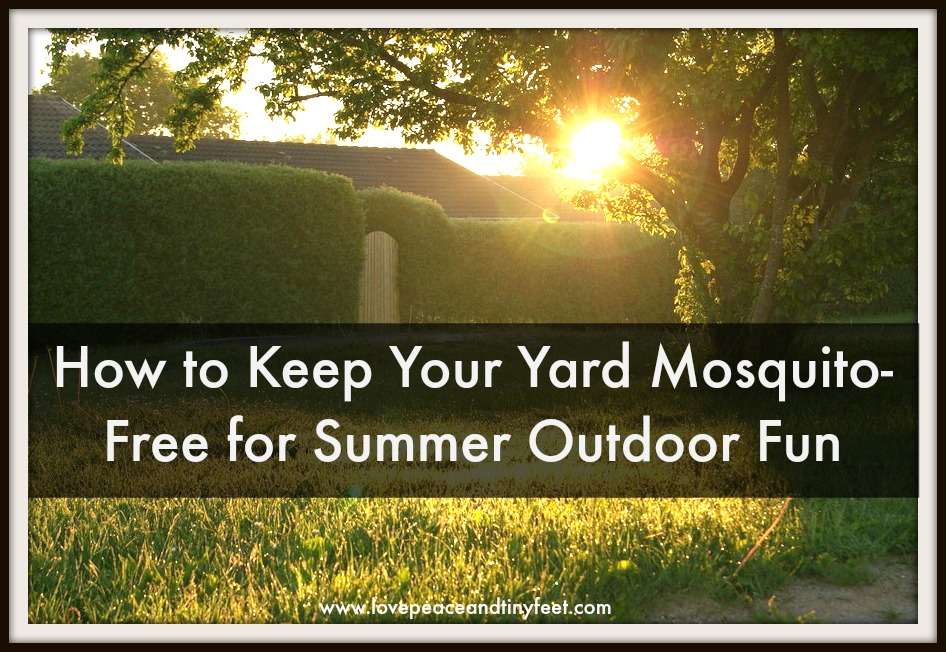 How to Keep Your Yard Mosquito-Free