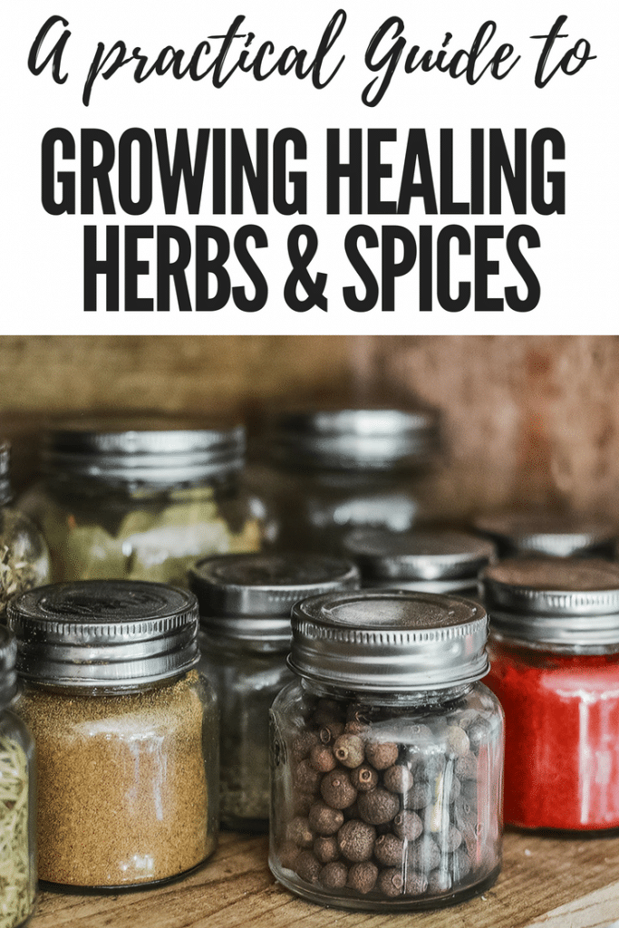 Healing herbs have lots of health benefits, but sometimes they are difficult to find. So why don't you try to plant and grow your own healing herbs and spices? Guide to growing your own healing herbs and spices, including growing aloe vera, peppermint, lavender, chives and caster oil plants.