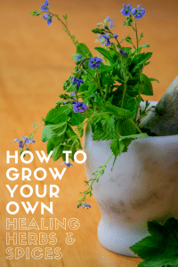 how to grow your own healing herbs and spices
