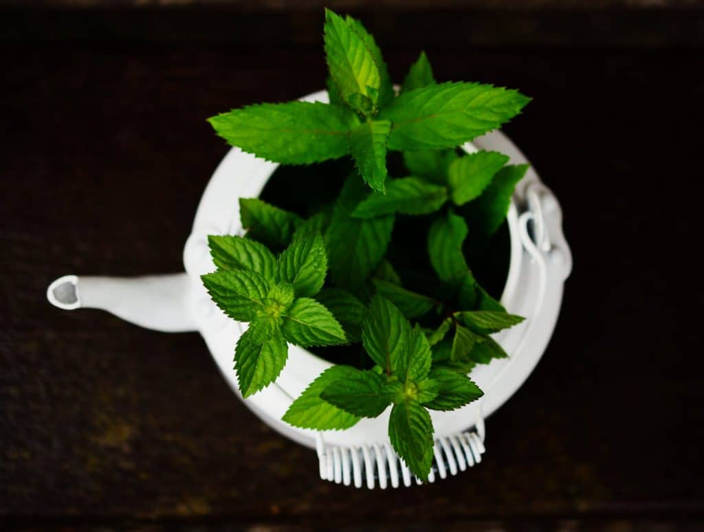 how to grow your own peppermint plant