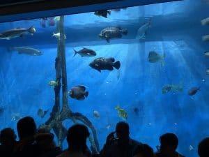 rumfish grill aquarium