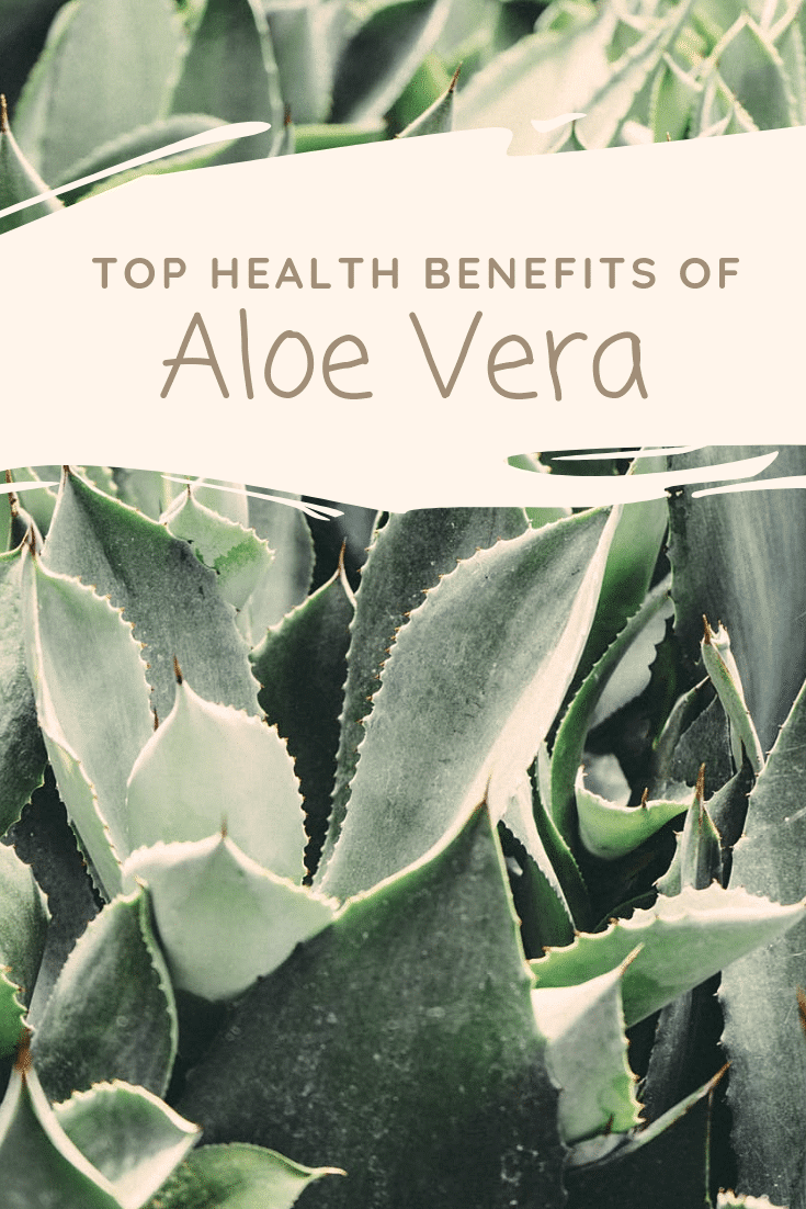 Aloe Vera juice can be considered a miracle drug. It's benefits include everything from treating IBS to lowering cholesterol to promoting healthy gums. Read more about these health benefits of aloe vera.