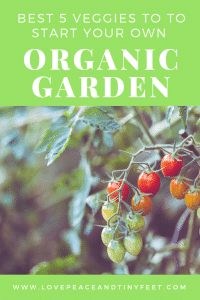 Starting an Organic Garden? Here are 5 veggies to start with