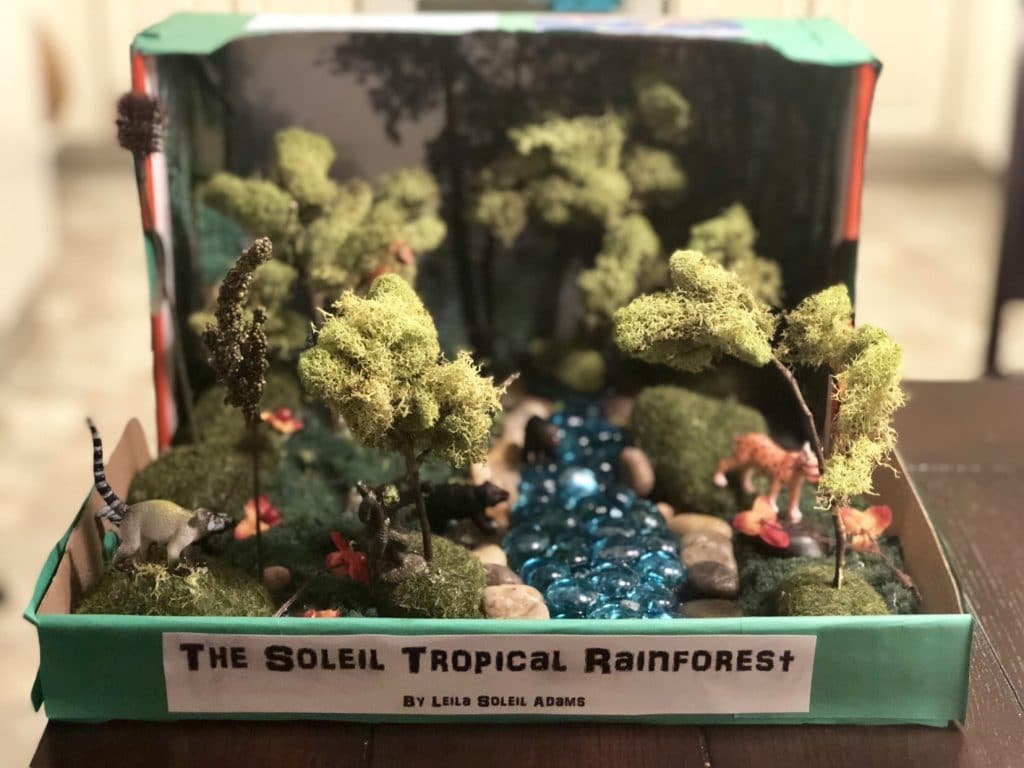 DIY tropical rainforest diorama for elementary school projects