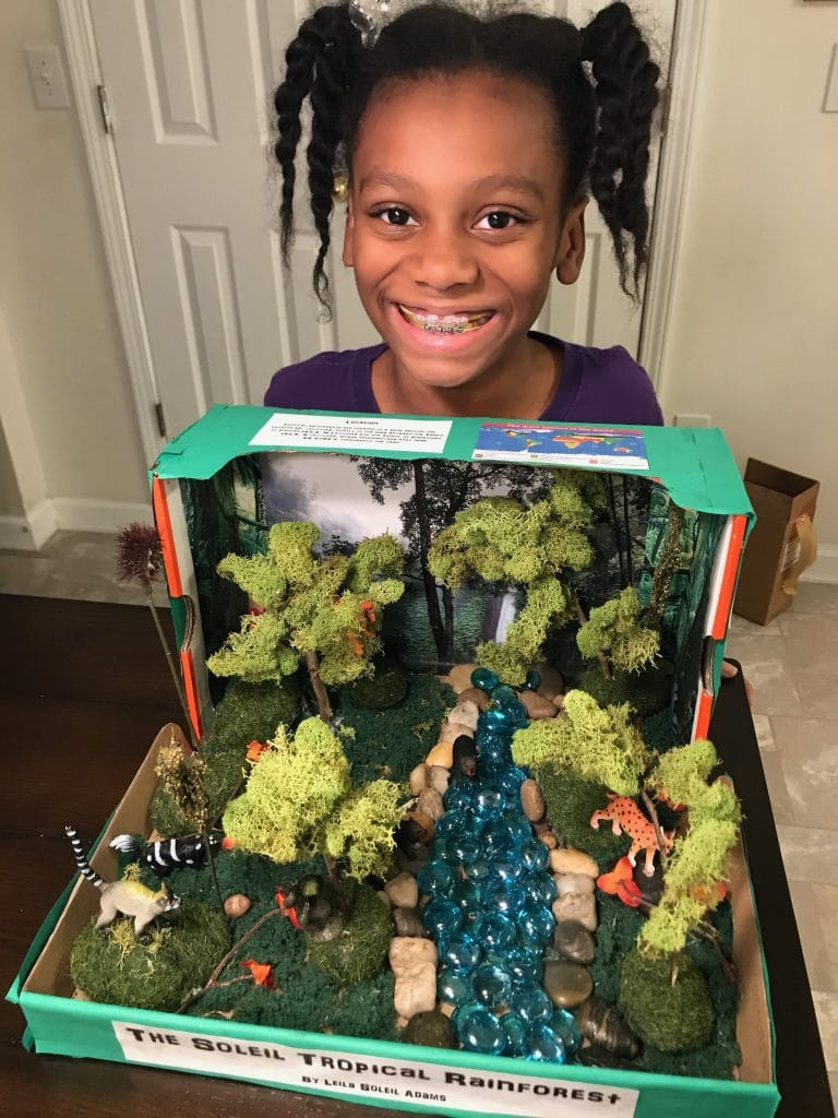 tropical rainforest diorama for elementary school project