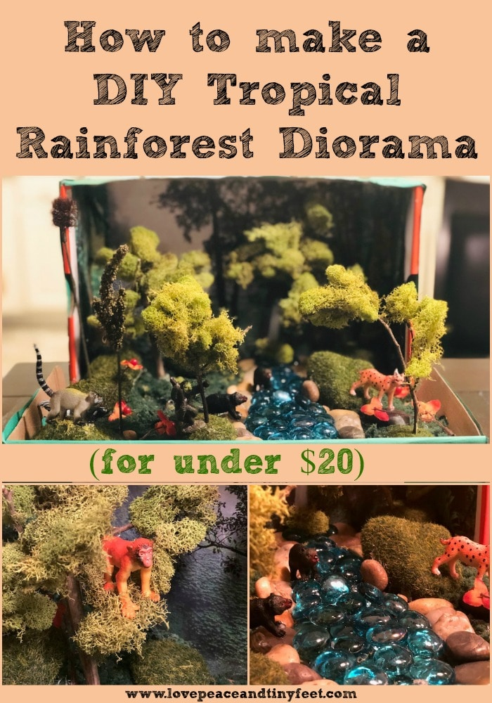 How to make a Tropical Rainforest Diorama for under $20