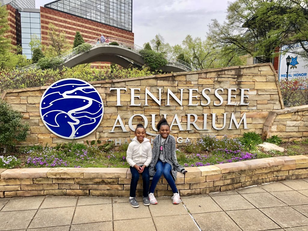 tennessee aquarium on a chattanooga day trip